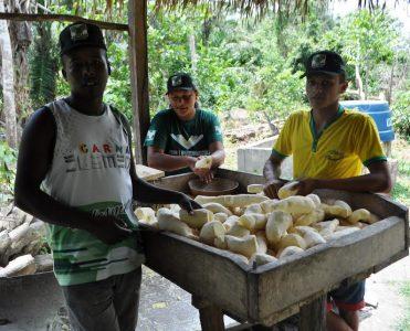 Pequenos produtores produzem farinha durante prática do curso Transformação da mandioca.