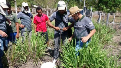 Aula prática dos produtores rurais.